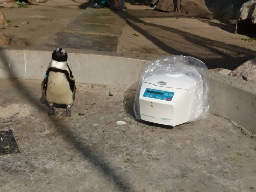 hettich pinguine